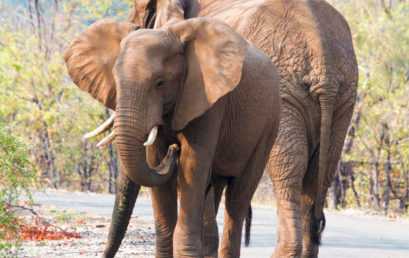 Stop Wildlife Trafficking – The Elephant Project
