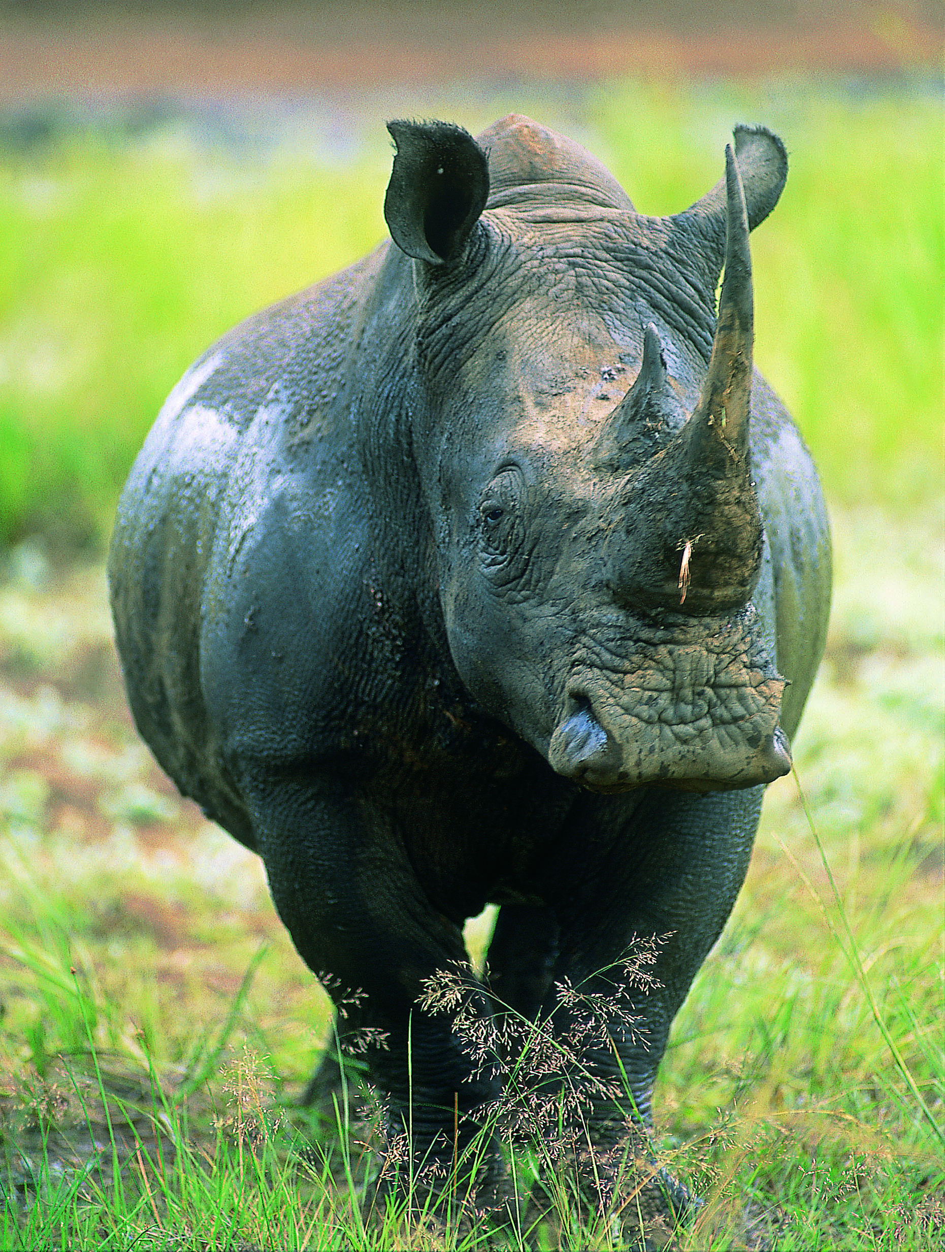 Stop Wildlife Trafficking – The Rhino Project